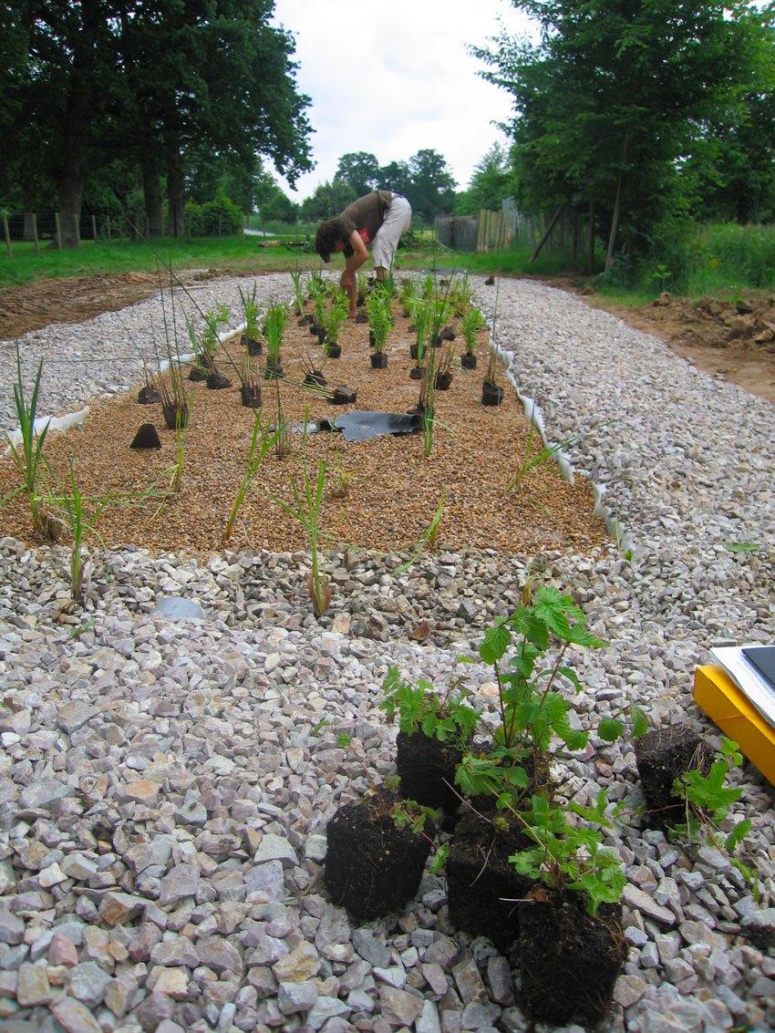 Épuration par les plantes : la solution efficace et paysagère par Moncorgé