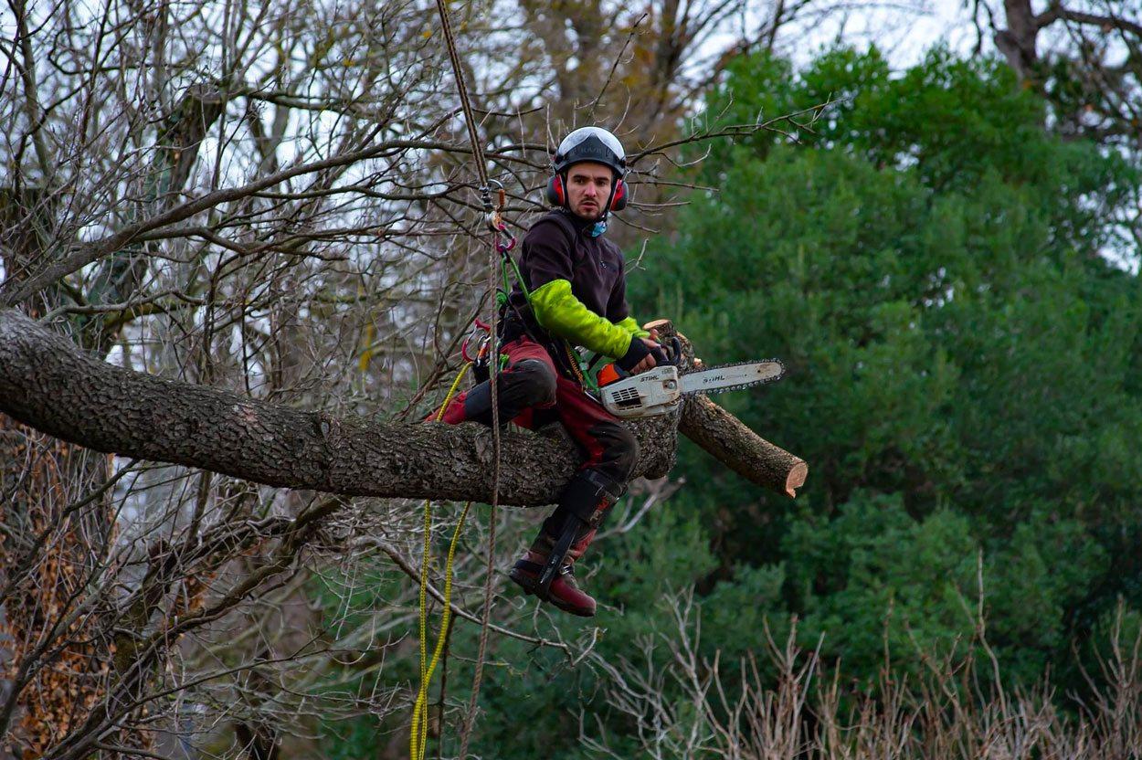 Sachez prendre soin de vos arbres